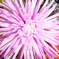 Starflower – The Currency of Love